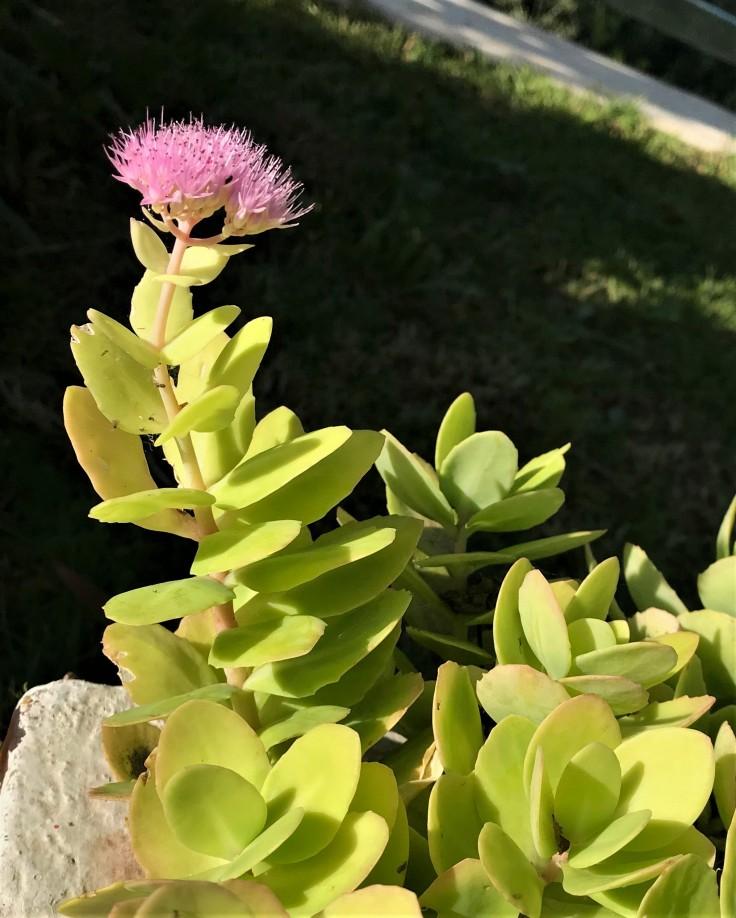 flower aa.jpg